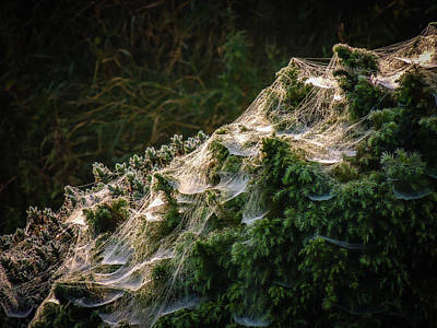 Photograph - Spider Webs In Morning Irish Dew by James Truett