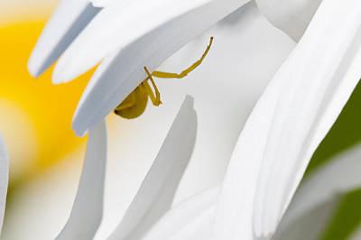 Photograph - Spiderland by Robert Potts