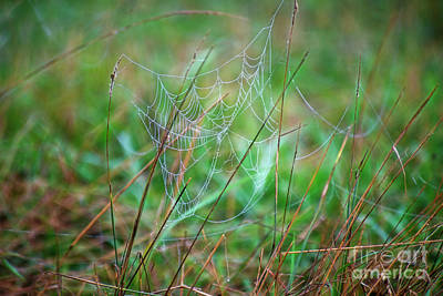 Photograph - Spiders Web by David Arment