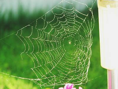 Photograph - Spider's Web  by Sharon Duguay