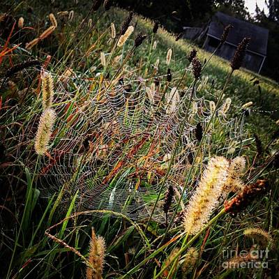 Photograph - Spiderweb by Angela Rath