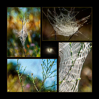 Photograph - Spiderweb Beauty Architecture  by Christina VanGinkel