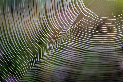 Photograph - Spiderweb Feather by Christina VanGinkel