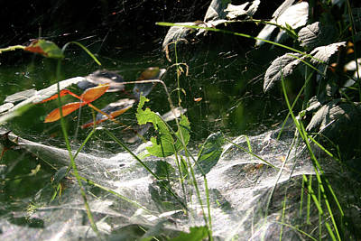 Photograph - Spiderweb Over Rose Plants by Emanuel Tanjala