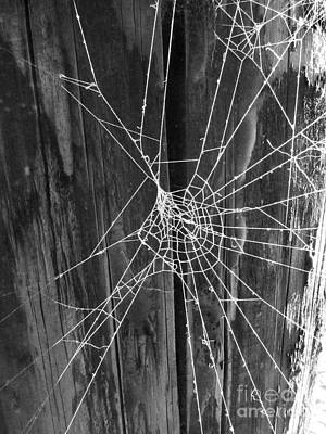 Photograph - Spiderweb Photograph by Kristen Fox
