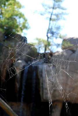 Photograph - Spiderweb Perspective by Kenny Glover