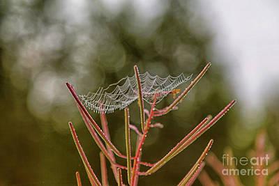 Spiderweb Photograph - Spiderweb by Veikko Suikkanen