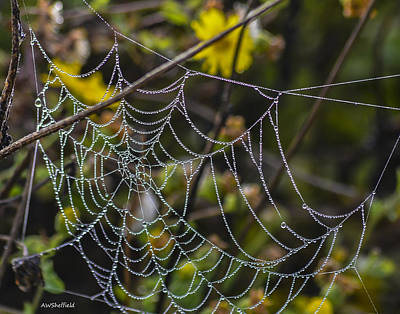 Photograph - Spiderweb With Dew 1 by Allen Sheffield