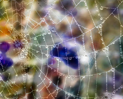 Invert Color Photograph - Spiderwebs Abstracted by Jane Selverstone