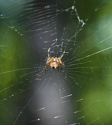Photograph - Spidey by Nikki McInnes
