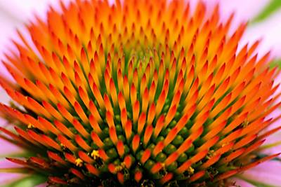 Photograph - Spikey Design by Larry Ricker