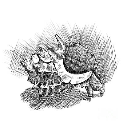 Just Desserts - Spiky Conch shell a pen and ink drawing by Adam Long