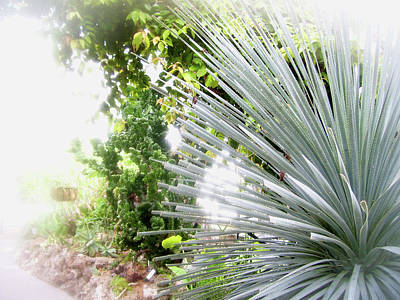 Photograph - Spiky Plant by Melinda Dare Benfield