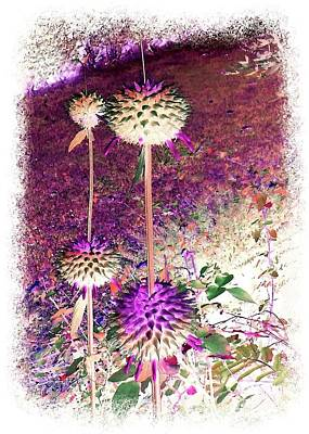 Photograph - Spiky Pods by Ellen O'Reilly