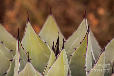 Photograph - Spiky Serenade  by Ruth Jolly
