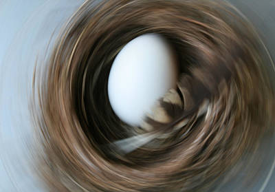 Photograph - Spin Egg Feather by Paulette Maffucci