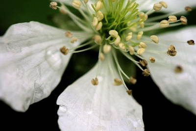 Photograph - Spindly Stamen by Angela Rath