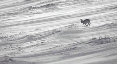 Photograph - Spindrift Hare by Peter Walkden