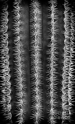 Photograph - Spines by Tim Gainey
