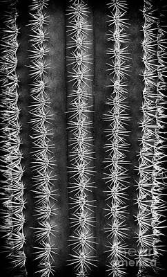 Spines Art Print