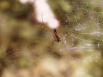 Photograph - Spinning A Wicked Web by Martha Ayotte