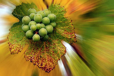 Photograph - Spinning Grapes by Jean Noren