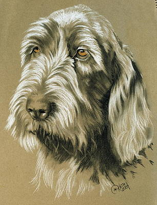 Sporting Mixed Media - Spinone Italiano by Barbara Keith