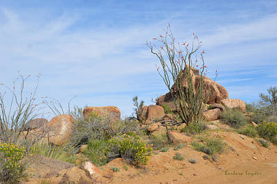 Spiny Painting - Spiny Cactus Wickenburg Arizona by Barbara Snyder