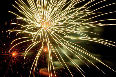 Photograph - Spiny Streams Of Light by Cate Franklyn