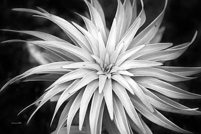 Photograph - Spiral Black And White by Christina Rollo