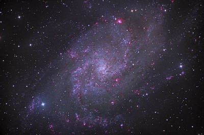 Photograph - Spiral Galaxy M 33 by Brian Peterson