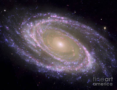 Photograph - Spiral Galaxy Messier 81 by Stocktrek Images