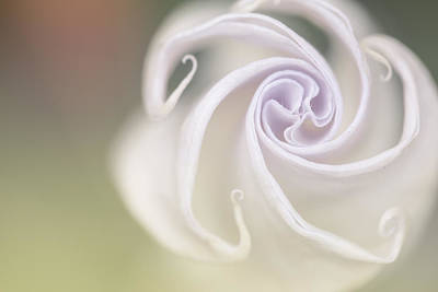 Dew Photograph - Spiral by Nailia Schwarz