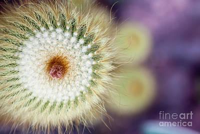 Photograph - Spiraling  by Ana Mireles