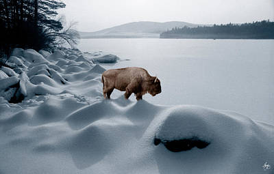 Photograph - Spirit Buffalo Before A Frozen Lake by Wayne King