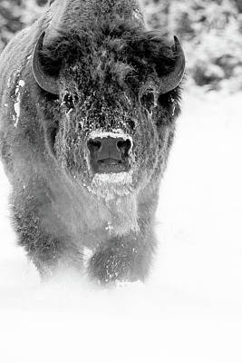 Photograph - Spirit Buffalo by Sandy Sisti