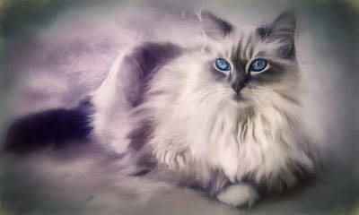 Domestic Animals Digital Art - Spirit Cat 3 - Painting by Darlene Kwiatkowski