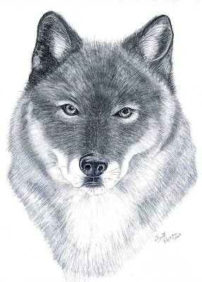 Wolf Painting - Spirit Guide by Joette Snyder