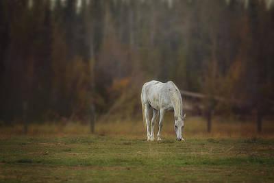Spirit Horse Art Print by Debby Herold