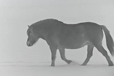 Dog In The Snow Photograph - Spirit by Odd Jeppesen