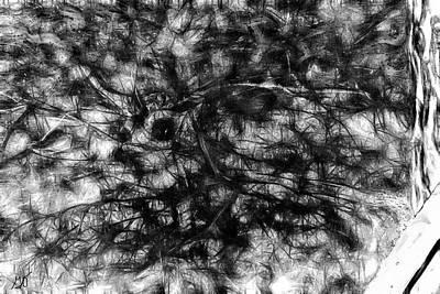 Photograph - Spirit Of Broken Branches by Gina O'Brien