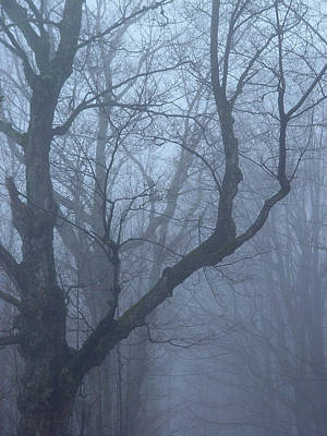 Cummington Photograph - Spirit Of Maple by Rosemary Wessel