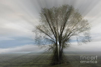 Art Print featuring the photograph Spirit Of Nature by Sandra Bronstein