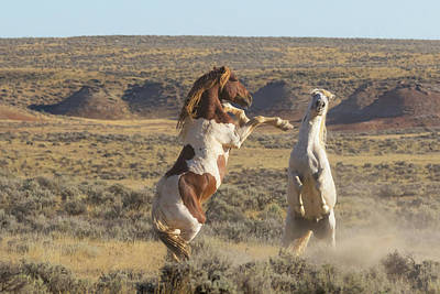 Photograph - Spirit Of The American West by Jack Bell