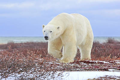 Photograph - Spirit Of The Arctic by Jack Bell