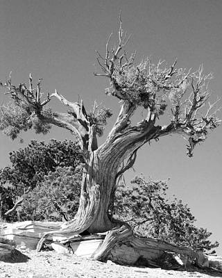 Art Print featuring the photograph Spirit Tree by Maggy Marsh