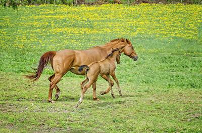 Chestnut Dun Horse Photograph - Spirited Foal by Donna Doherty