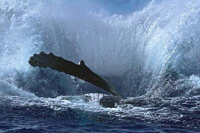 Wall Art - Photograph - Splash After Huge Humpback Breach by Nan Hauser