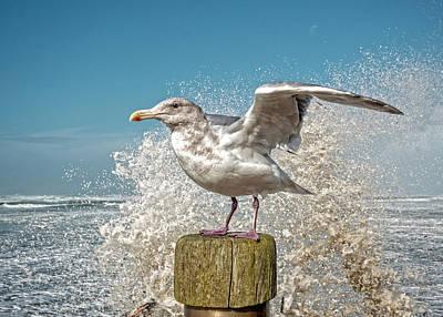 Photograph - Splash Gull by Bill Posner