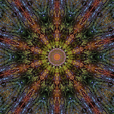 Jodi Diliberto Royalty-Free and Rights-Managed Images - Splash in a Psychedelic Pond by Jodi DiLiberto